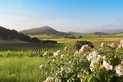 Countryside in Napa, County California
