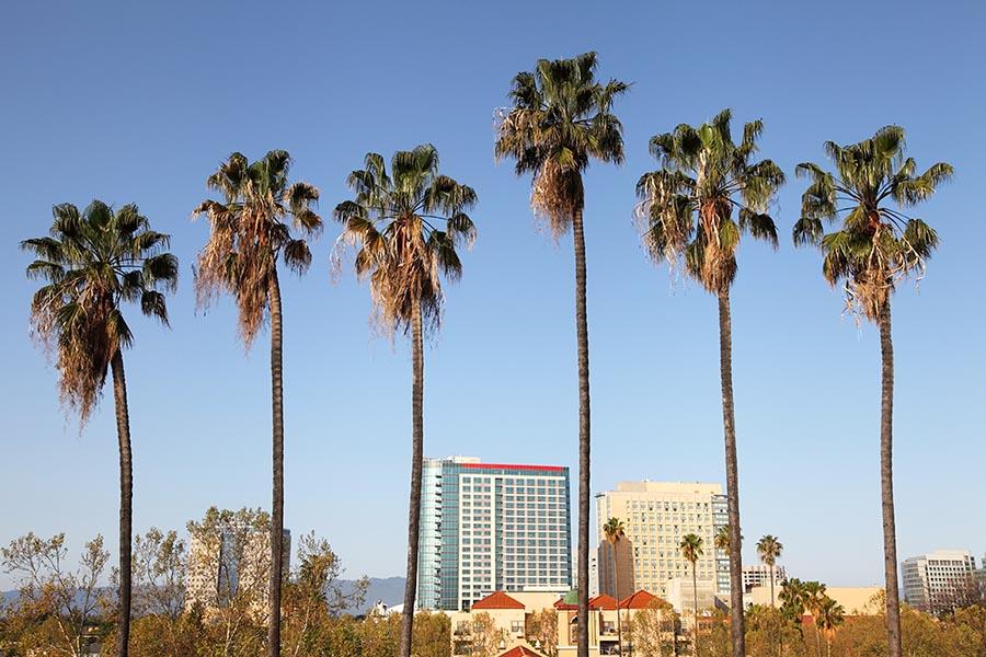 Palm trees - Pacific Union