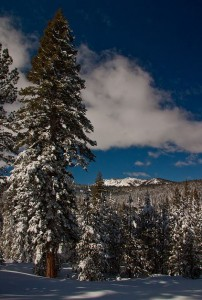 The view from a cross-country ski trail at Tahoe Donner.
