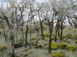Inside Annadel State Park