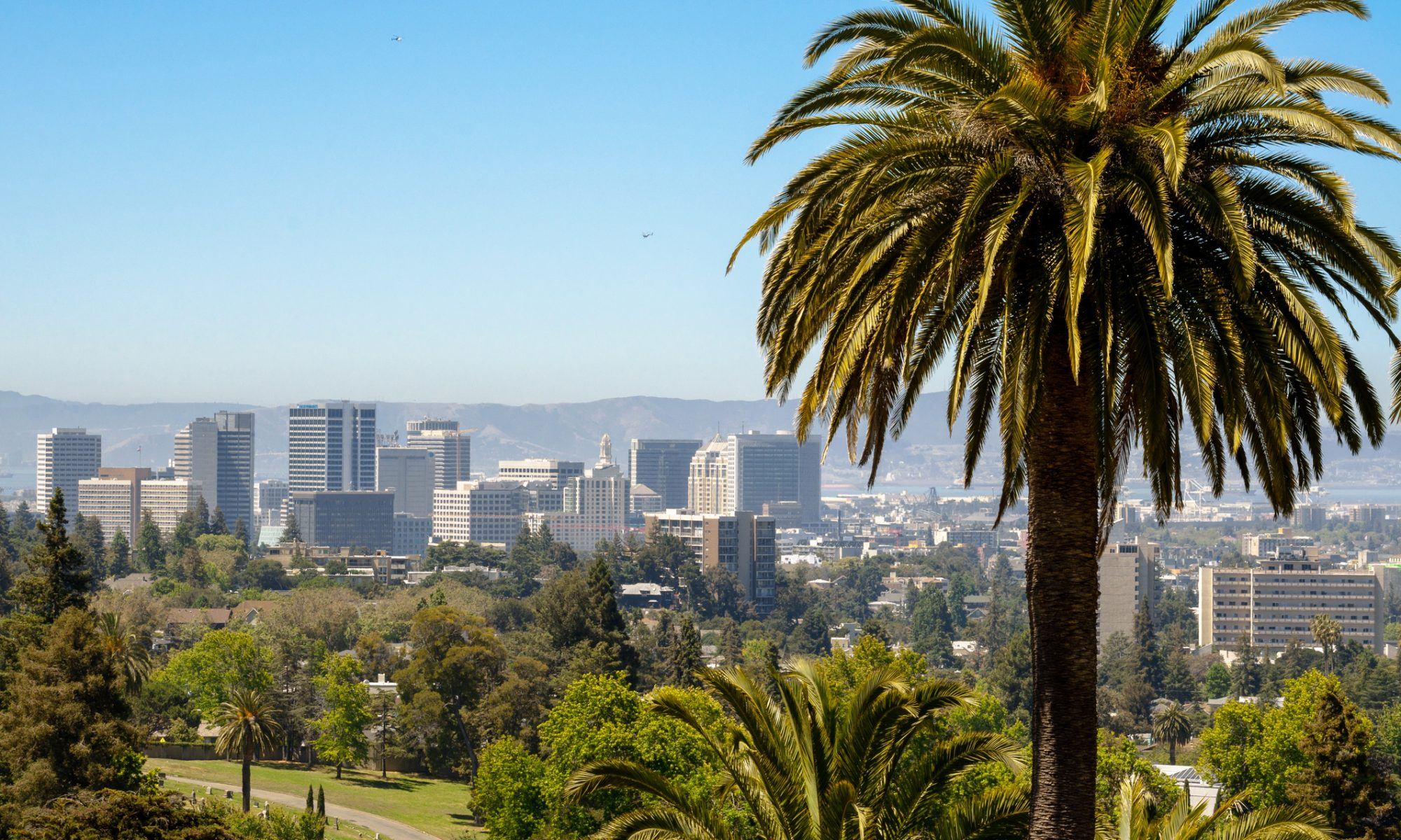 Palmtree in Oakland