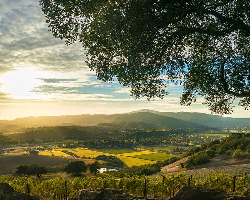 unset at Sonoma California patchwork vineyard at harvest